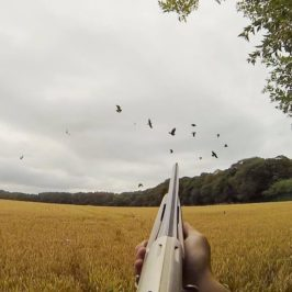 Pigeon Shooting over Barley