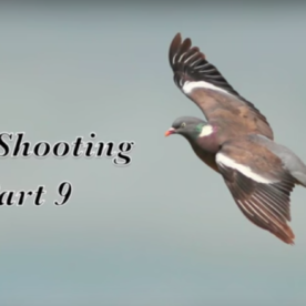 Pigeon Shooting – Crop Protection