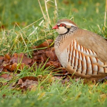 Red-legged partridge release programme